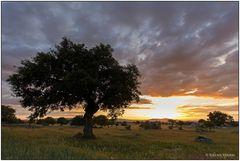 Abend in den Steineichen der Extremadura