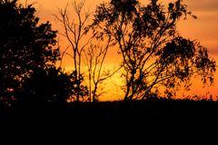 Abend Inpressionen an Waldesrandes