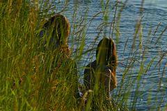 Abend - Romantik am Rheinufer