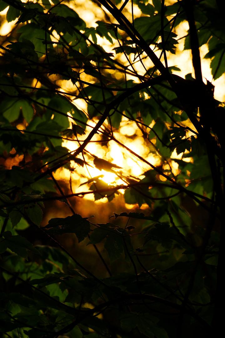 Abendblätter
