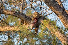 Abendessen im Baum