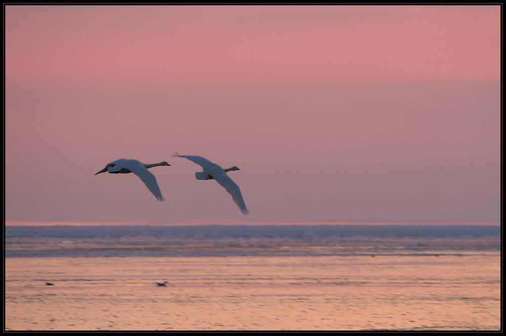 Abendflug über das Eismeer..