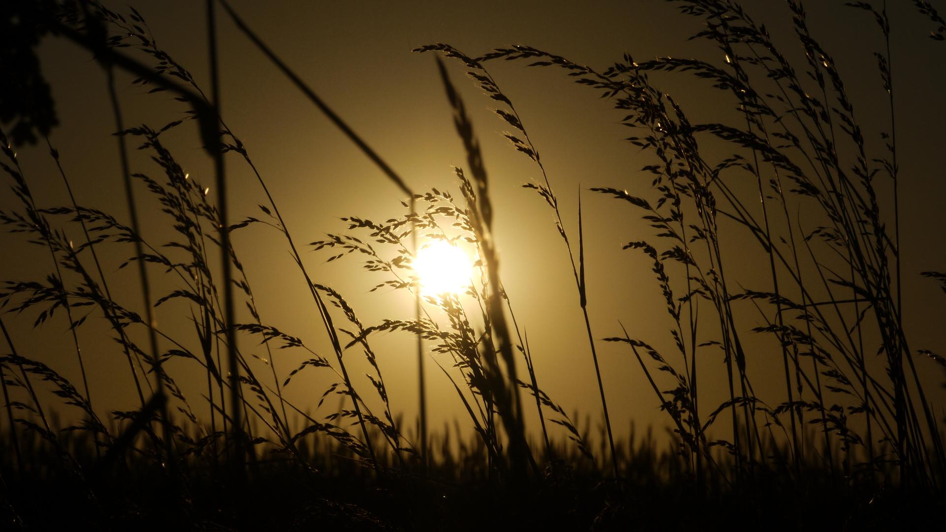 Abendgold