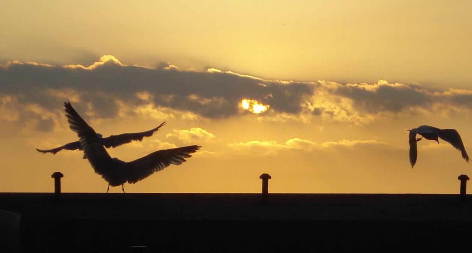 abendhimmelmöwenflug