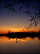 Abendleuchten........in der blauen Stunde!