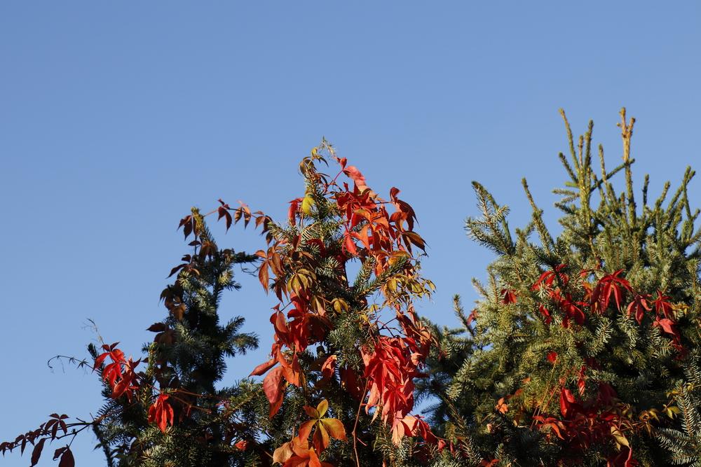 abendliche Herbststimmung
