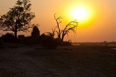 Abendliche Idylle im Chobe Nationalpark