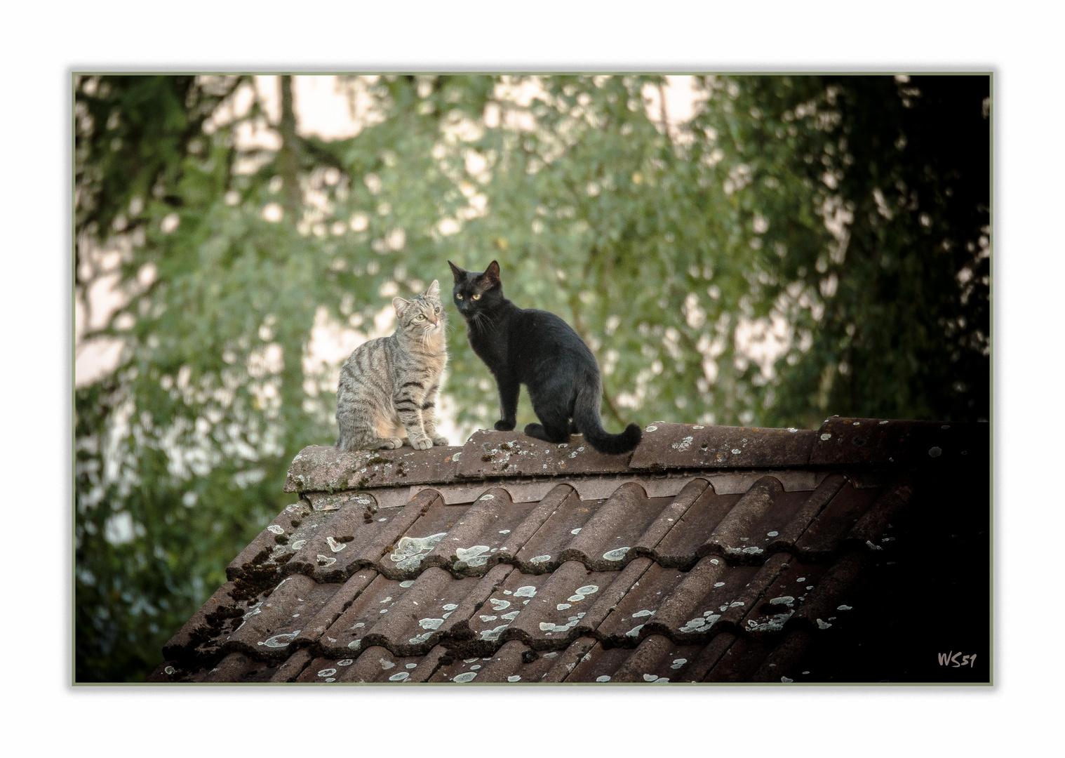 abendliches Treffen auf dem Dachfirst ...