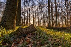 Abendlicht im Wald