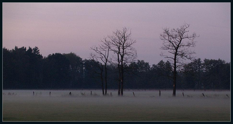Abendnebel über den Feldern