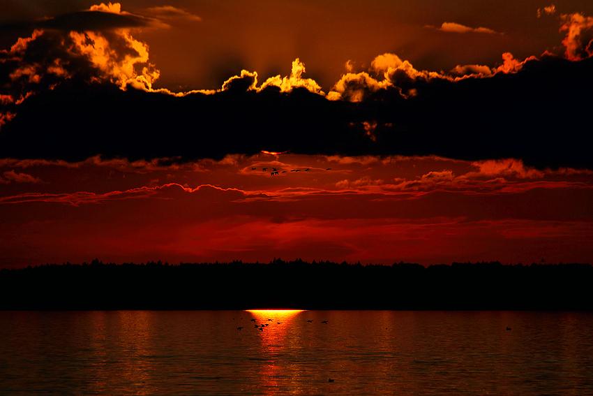 Abends am Chiemsee (2 Gruppen von Enten fliegen hier fast syncron)