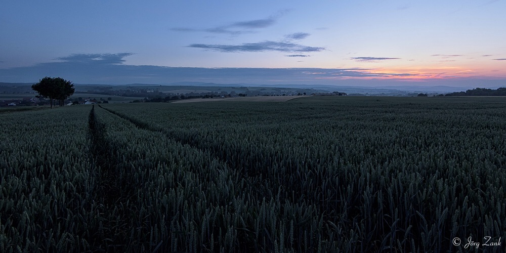 Abends am Getreidefeld