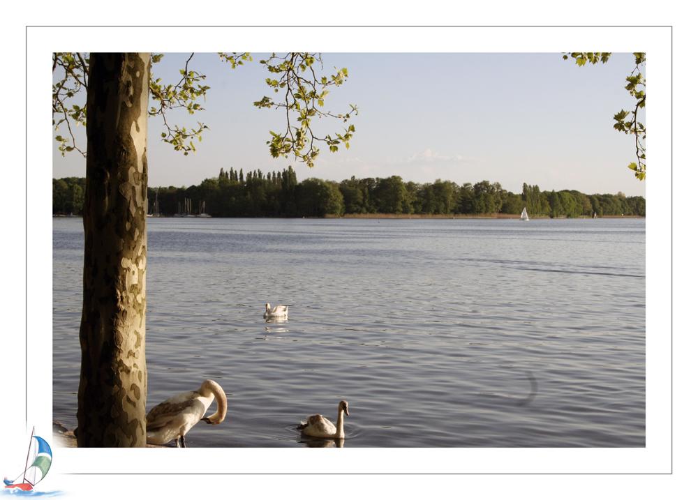Abends am Tegler See