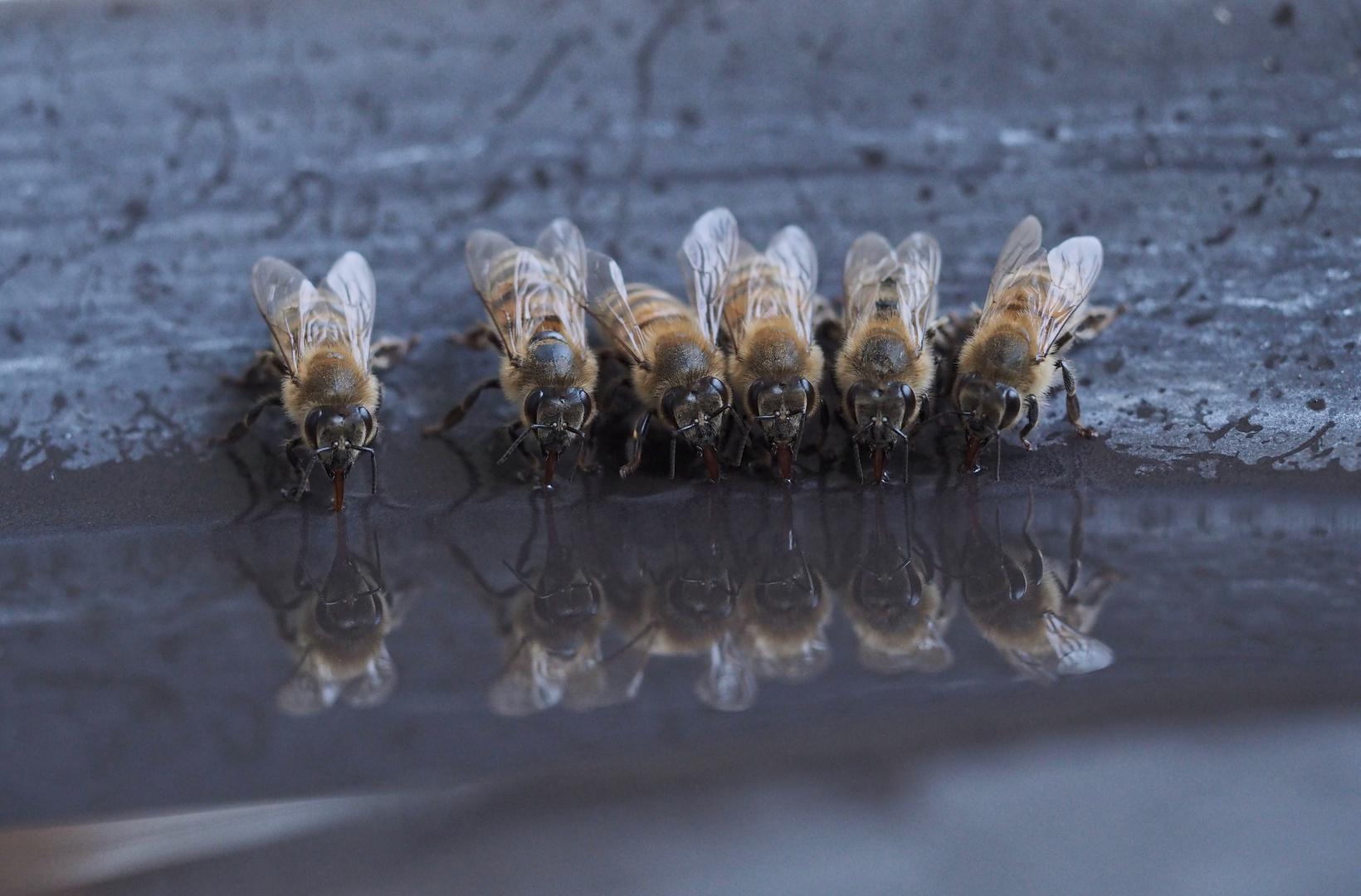 Abends an der Bienentränke