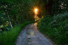 Abends auf dem Panoramaweg von  Bodenmais