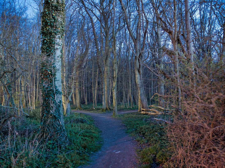 Abends im Gespensterwald