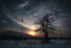 Abends im Moor