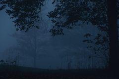Abends im Nebel