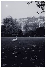 abends im Park ...
