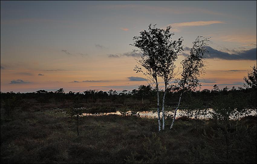 Abends im schwarzen Moor