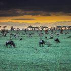 Abends in der Serengeti