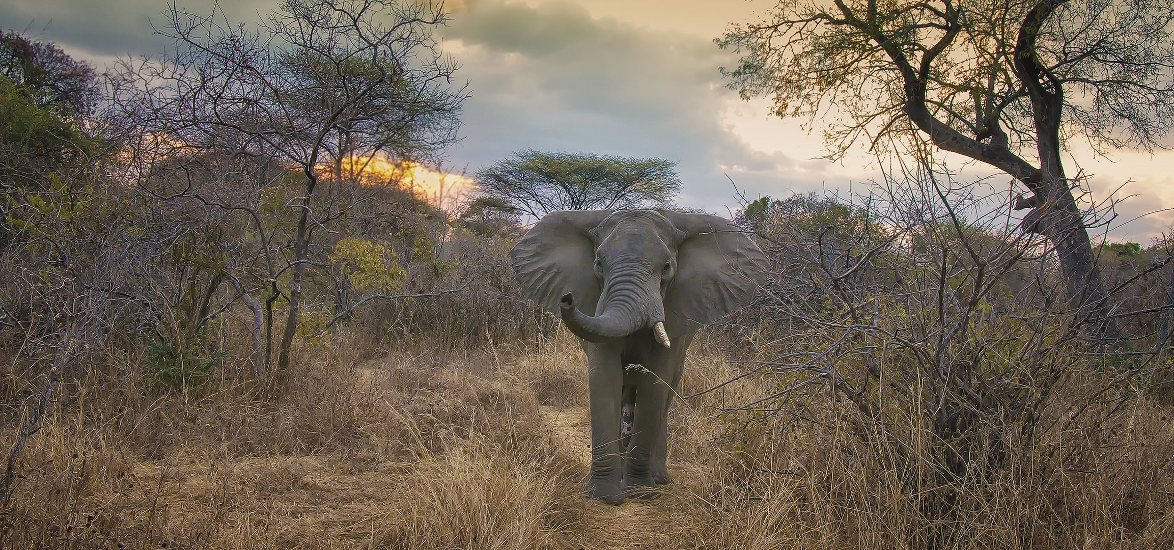 Abends in Ruaha