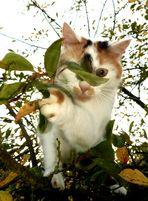 ABENDS UM 8 im Apfelbaum
