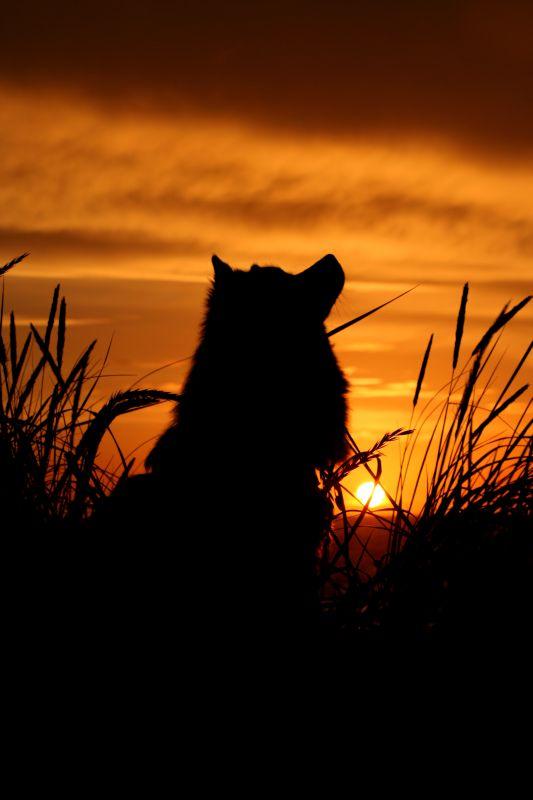 Abendsilhouette