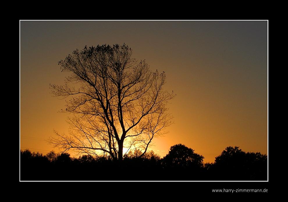 Abendsonne-1