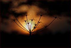 - Abendsonne -