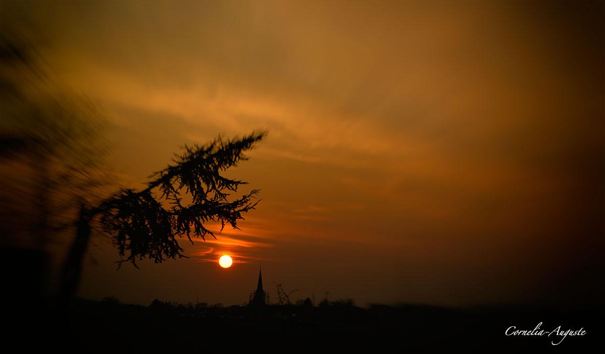 Abendsonne..
