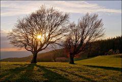 Abendsonne -
