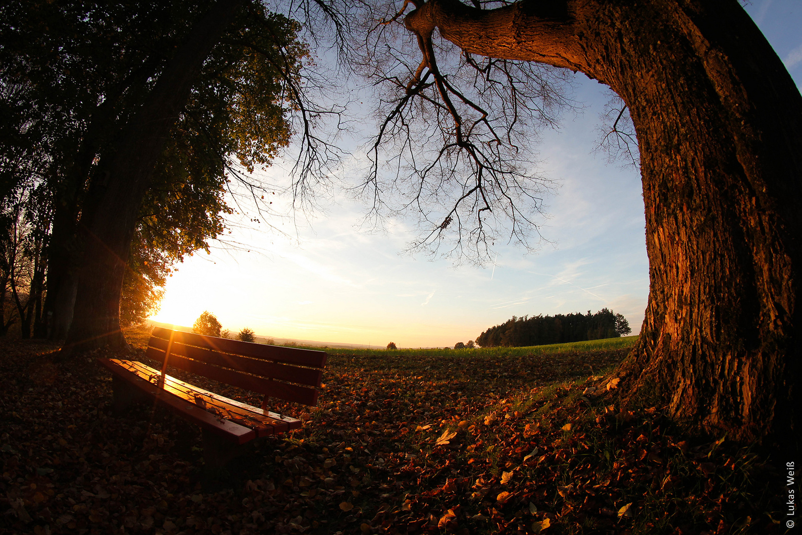 Abendsonne im Herbst