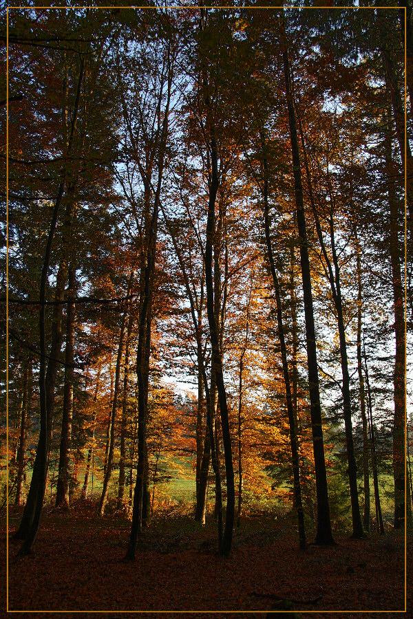 Abendsonne im Herbstwald