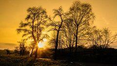 Abendsonne im Januar