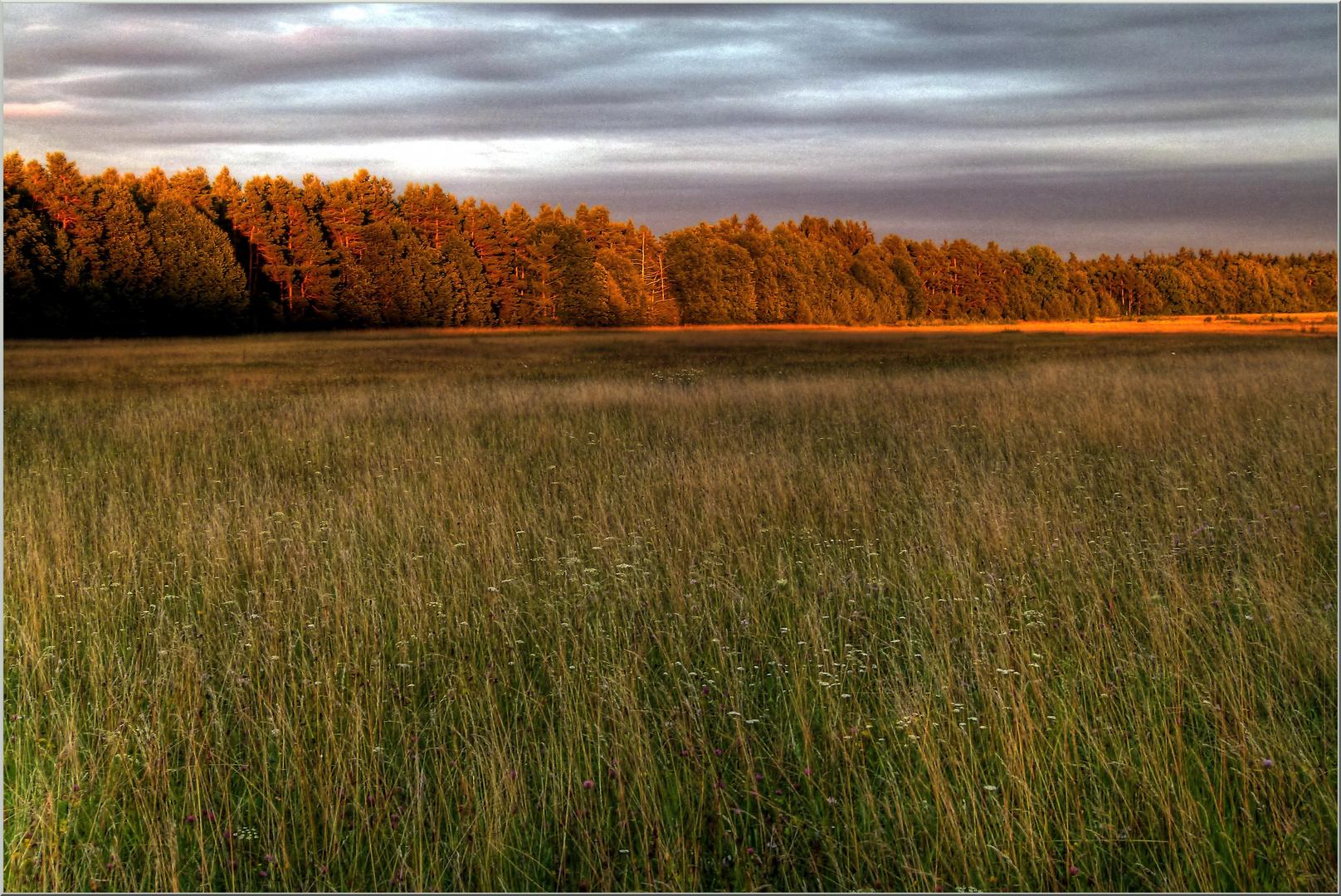 Abendsonne im späten Spät-Sommer