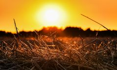 Abendsonne im Stroh
