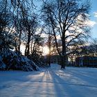 Abendsonne im Winterwald