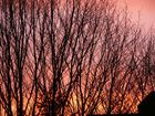 Abendsonne kitzelt die Baumkronen