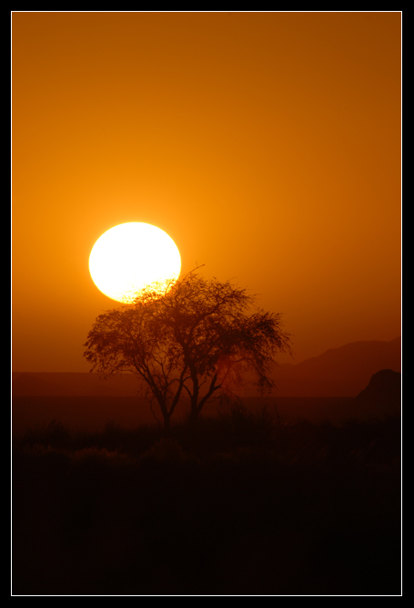 Abendsonne mit Baum