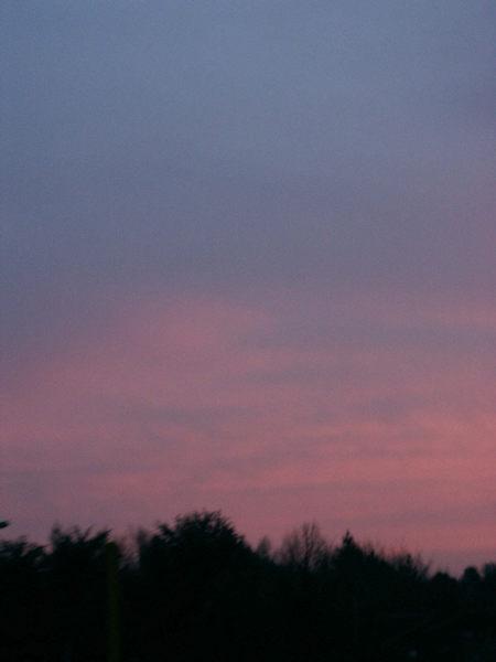 Abendsonne streichelt die Bäume