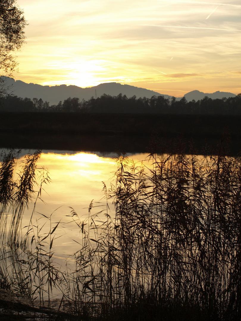 Abendstimmung am Bodensee (Hard, Rheindamm)