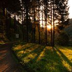 Abendstimmung am Rande des Waldes