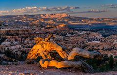 Abendstimmung am Sunrise Point, Bryce Canyon NP, Utah, USA