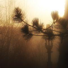 Abendstimmung bei Sonnenuntergang und Nebel