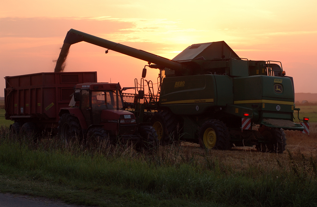 Abendstimmung-das Korn kommt