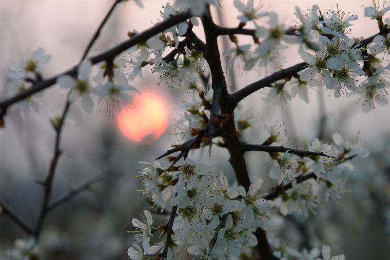Abendstimmung im Frühling