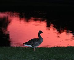 Abendstimmung im Nymphenburger Schlosspark