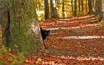 Abenteuer Herbst