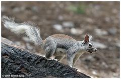 Abert Hörnchen, Teil 2